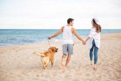 Flitterwochen mit Hund – Tipps für eure Planung